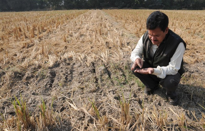 Image Result For Happy Punjab Farmers