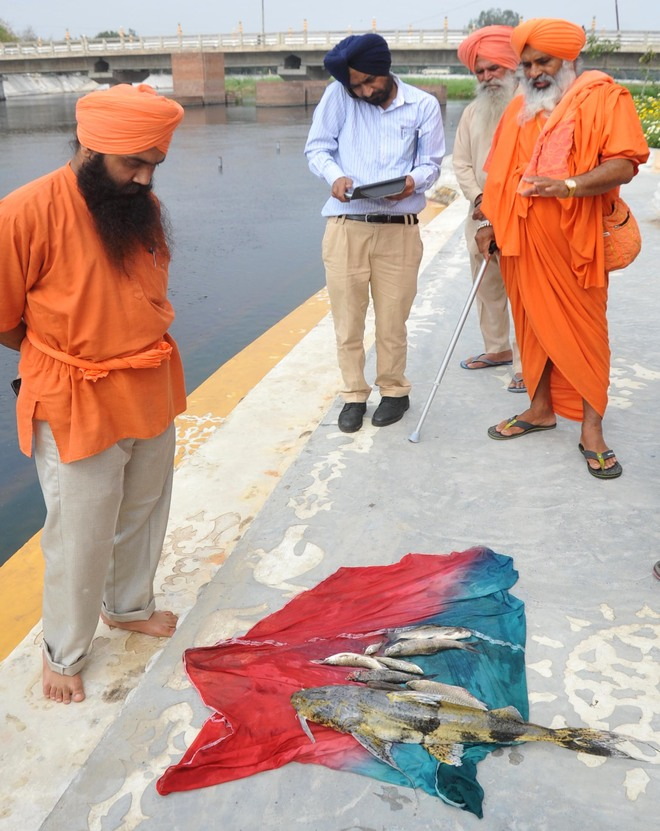Week before Baisakhi, dead fish found in holy Kali Bein