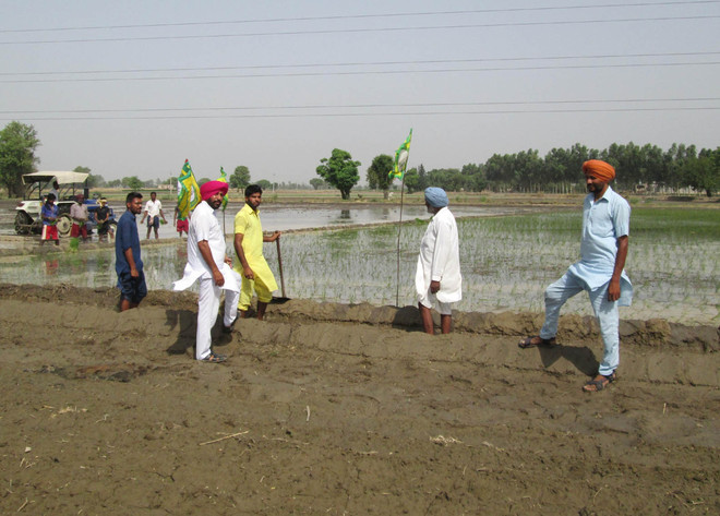 Paddy season begins, PSPCL sets up control rooms for farmers