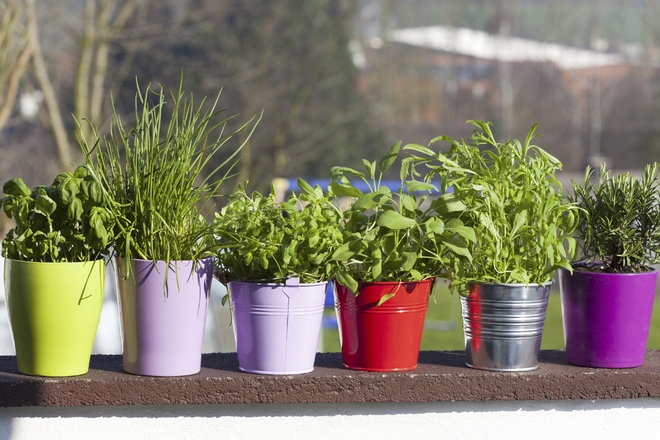 Herb garden in my balcony