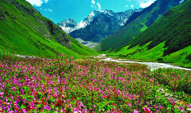 god's garden of purest pleasures, Natural flower