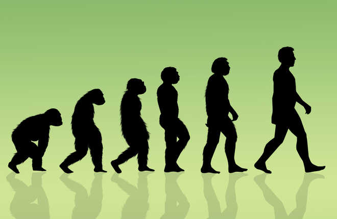 Human body went through four stages of evolution