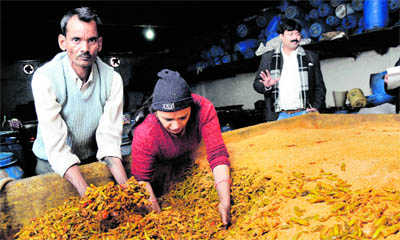 Spice of life: Surrender to Panipat pickle!