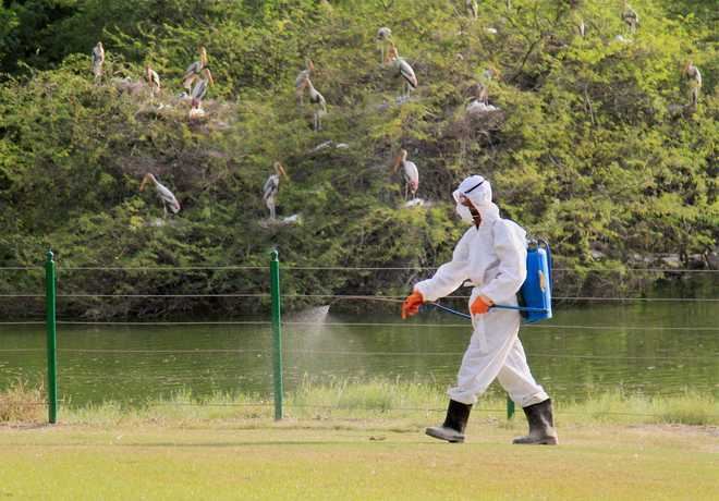 Birds in Gwalior zoo died of new avian flu subtype: Officials