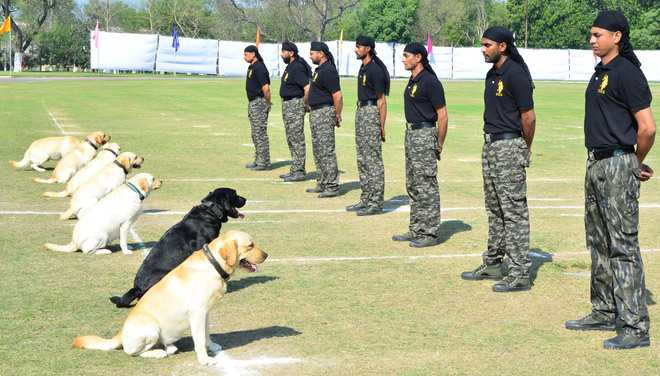 Police Dog Training Videos In India