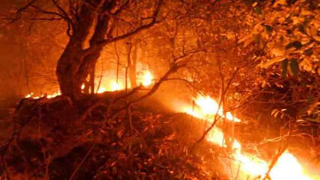 Fire Engulfs Forest In Mussoorie