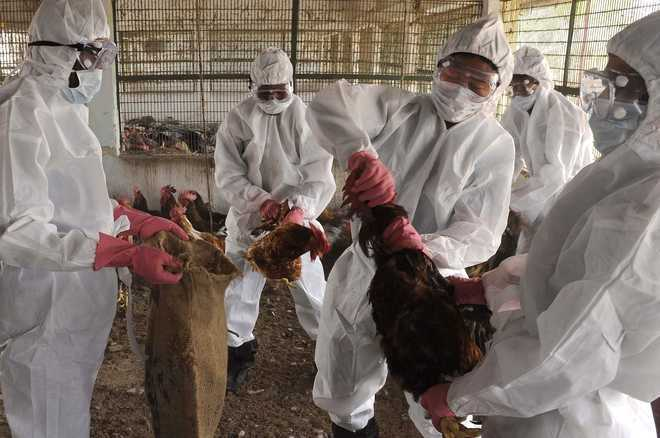 India declared free from bird flu, surveillance to continueCOMMENTSMOST READTOP STORIES                CITY FOCUS            UT rejects MC budget, terms it unrealisticSCI/TECH/GADGETS/ENV.HEALTH