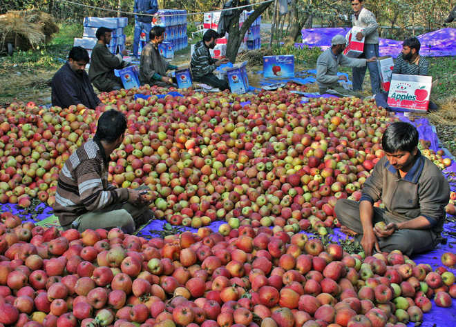 The call of home made this US-returned entrepreneur revive Kashmir's apple industry