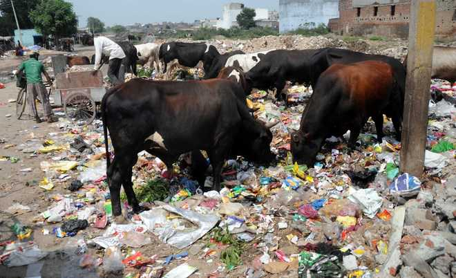 stray menace on city roads One can still witness stray cattle roaming on city roads hitting vehicular traffic  the stray cattle menace in city has become a matter of concern after a.