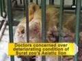 Surat vets concerned over worsening health of Asiatic lion