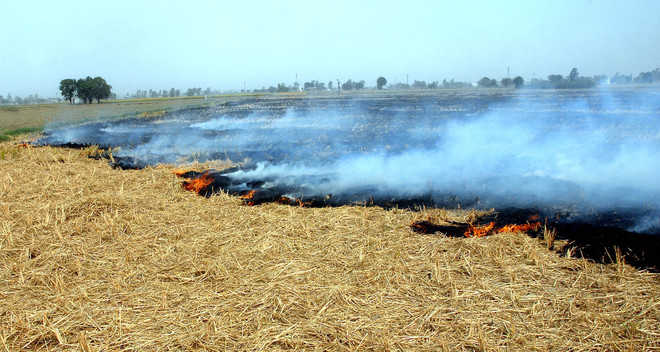 NGT seeks response of Centre, states on stubble burning
