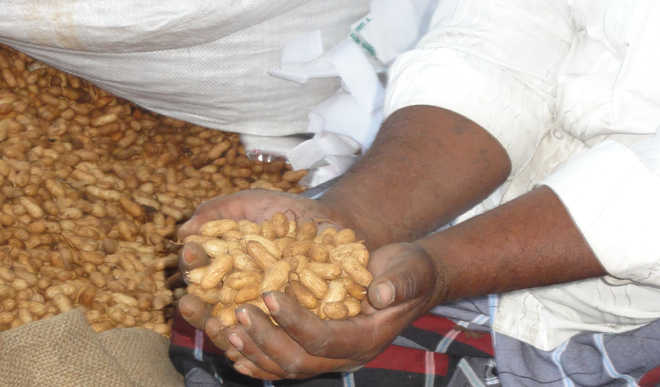Groundnuts to appease the Lord