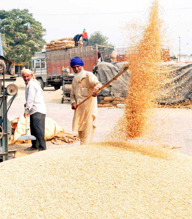 28% more paddy arrival at mandis this year, say officials