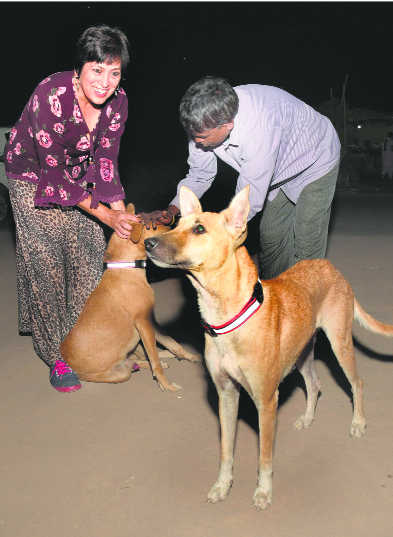 Checking mishaps: Stray dogs get reflective collars