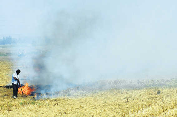 A solution to crop residue burning
