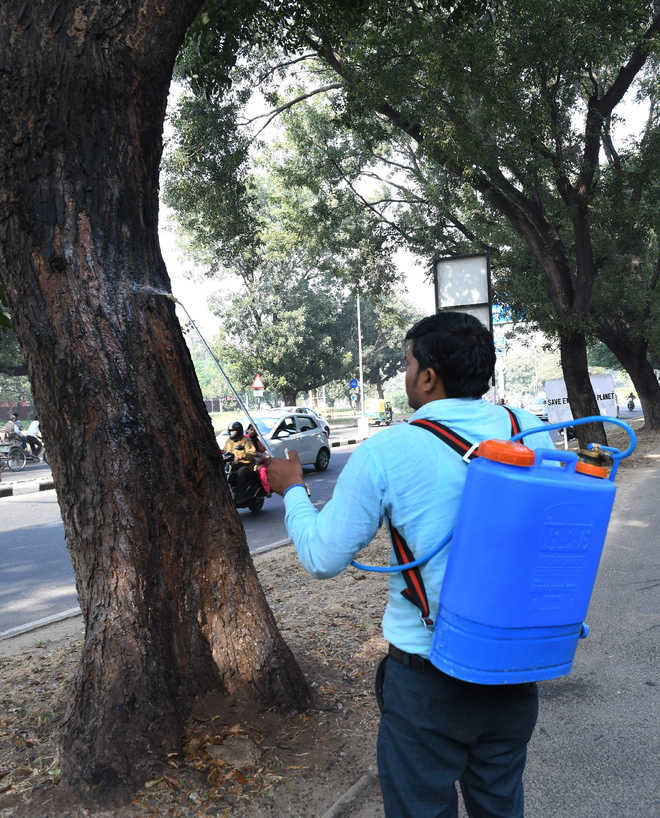 MC staff given sprayers to treat termite-hit trees