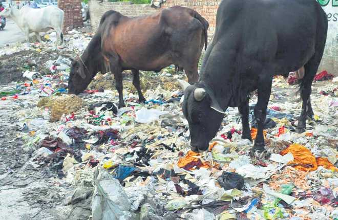 Traffic, encroachments choke markets
