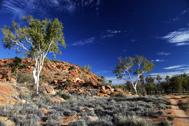 Queen of Australia's outback