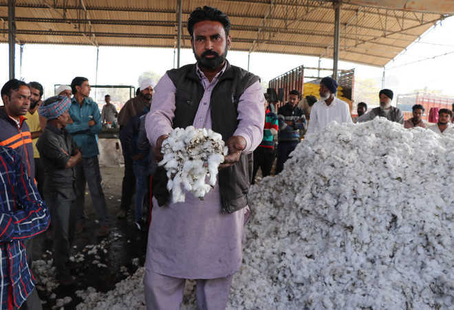 10 quintal of cotton destroyed in fire