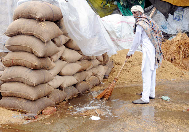 Rain soaks paddy, Basmati stocks at Bhagtanwala