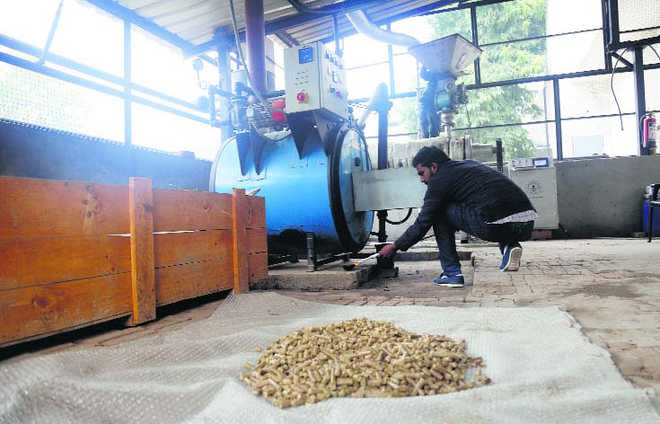 Now, scientists turning paddy straw into 'pellets'