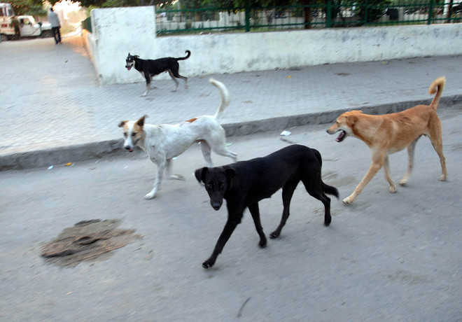 Residents want firm steps to curb stray dog menace