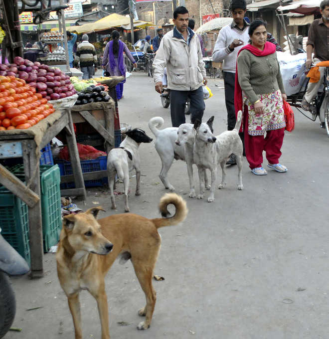 Stray dog menace plagues city, rural belt as well