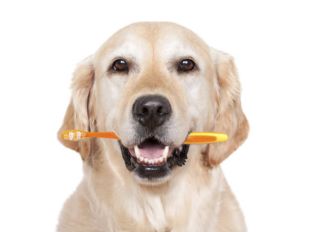 Don't ignore your pet's oral hygiene