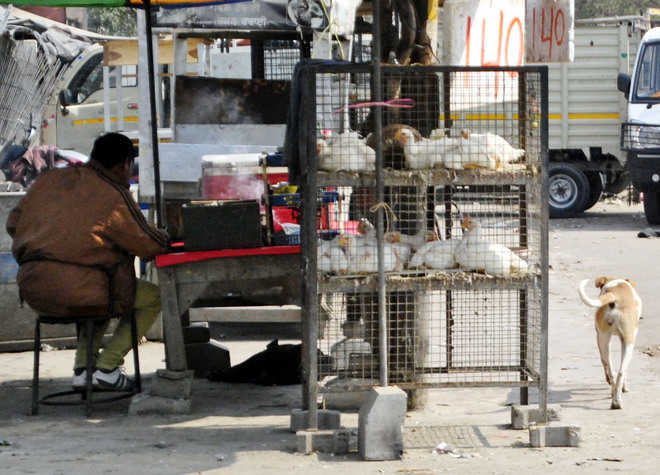 No check on roadside slaughter houses selling uninspected meat