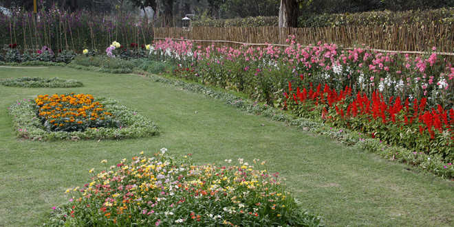 Annual flower show in cantonment: Battle for supremacy on March 19