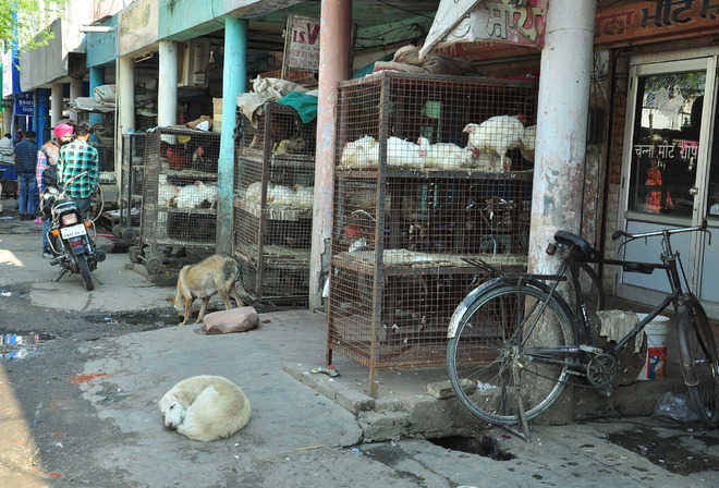 Many butcheries not registered with MC