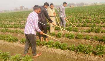 Farmers hit hard as prices of veggies fall