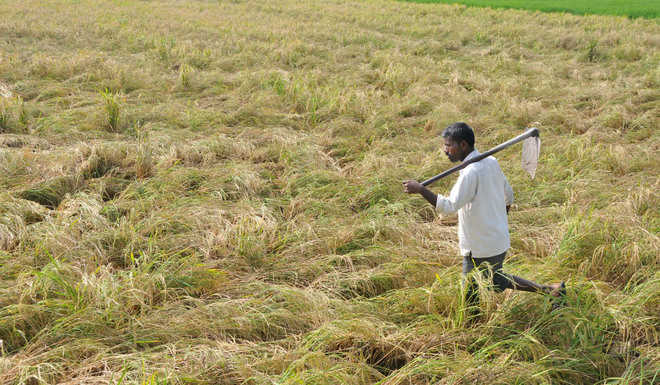 UK researchers to study agriculture in Indo-Gangetic plain