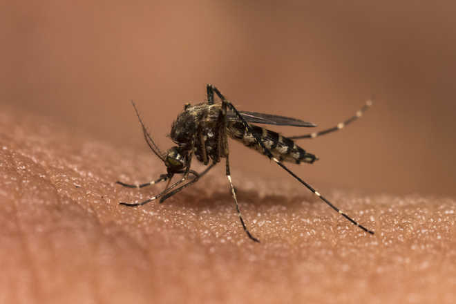 Scientific breakthrough to aid malaria vacccine research