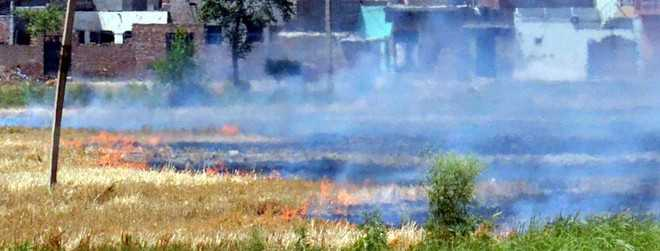 Government to act against farmers burning straw