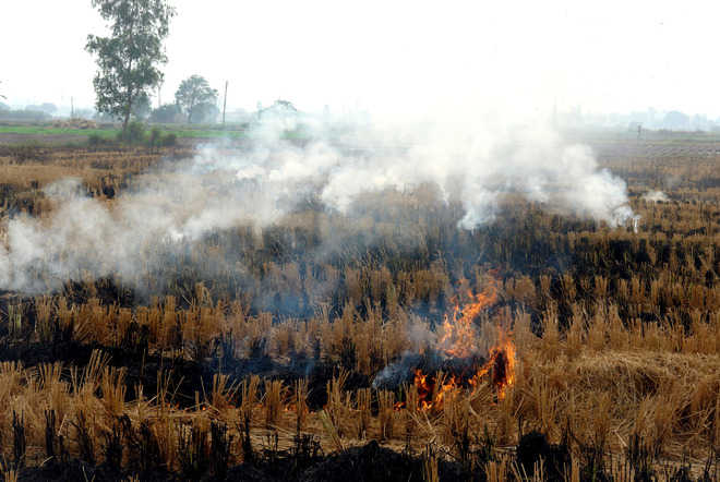 NGT goes strict on stubble burning