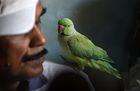 Indian camera technician and parakeet enthusiast Joseph Sekar, 62, with a parakeet on his shoulder at his home in Chennai. AFP