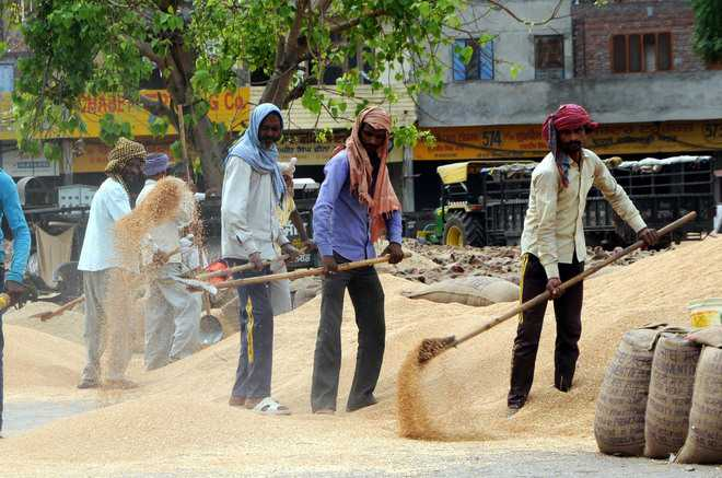 Rain hampers harvesting, procurement of wheat