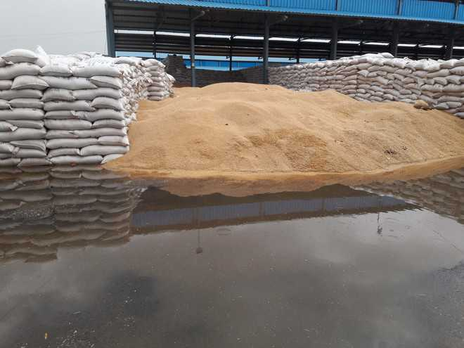 Procured wheat drenched in Mewat mandi