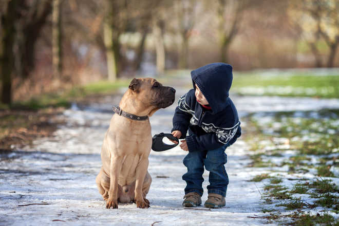 Pet dogs may help cut stress in kids
