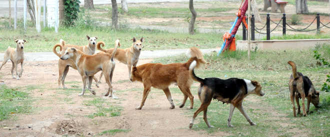 Finally, Panchkula ropes  in firm to sterilise canines