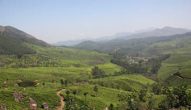 Magic in Munnar