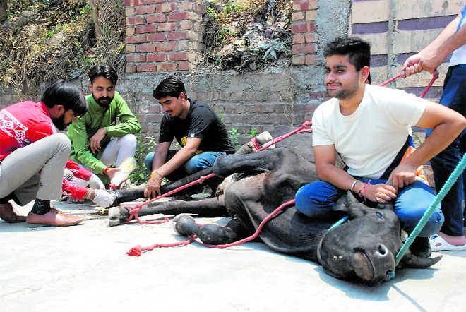 Animals in distress find young saviours