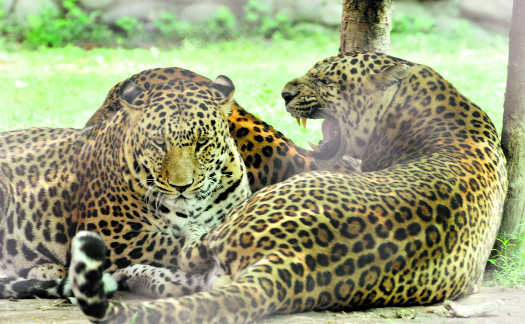 Soon, Chhatbir Zoo to become hotspot for wildlife enthusiasts