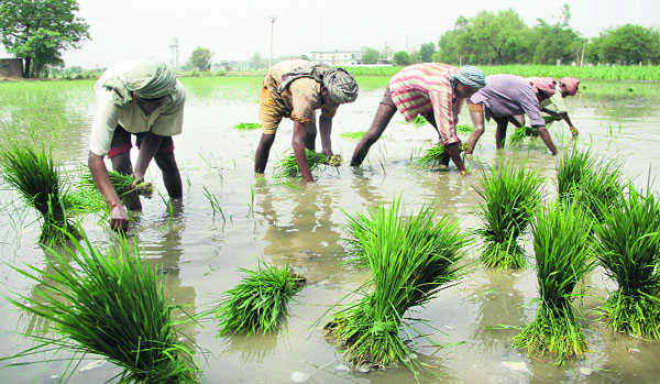 Waiver may not help farmers in debt trap
