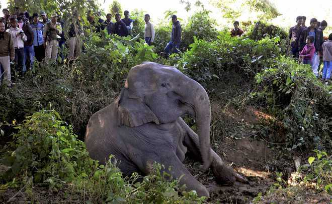 40 elephants killed between 2014-17 on rail tracks: Govt