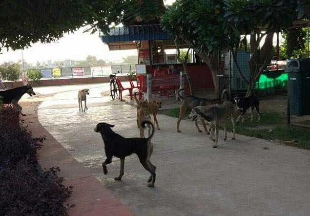 Stray dogs a nuisance for morning walkers