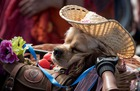 A dog sleeps in the basket of a bicycle during the 5th Lady on Bicycle annual festival at Sokolniki park in Moscow on August 06, 2017. AFP