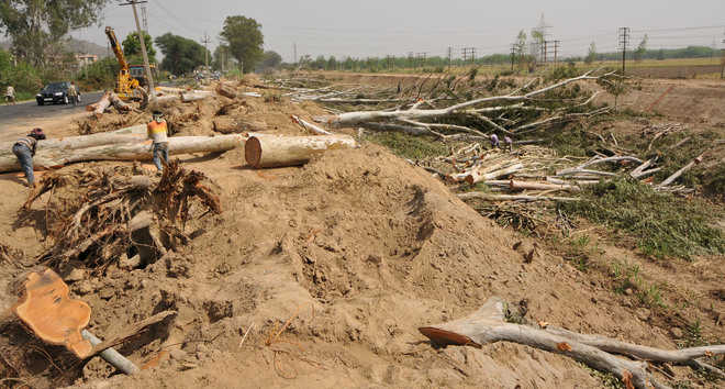 NGT summons records on felling of trees along canal