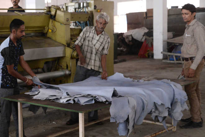 HC stays NGT order on closing 19 tanneries in Jalandhar